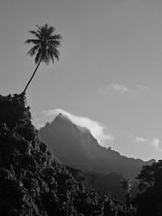 Mt. Finkol, Kosrae, Micronesia (ebuechley) Tags: ocean island scenery pacific wildlife fsm micronesia kosrae