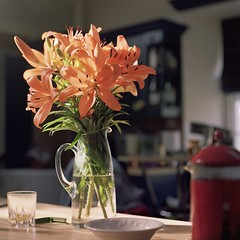 Lilies (jamalrob) Tags: flowers orange sunlight film square website medium pentacon