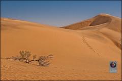 Wstentour-12 Kopie (kurvenalbn) Tags: reisen orient wste arabien jemen inderwste
