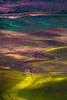 The Palouse_Tapestry Of Colors (kevin mcneal) Tags: rural washington kevin state farming experience wa eastern palouse mcneal