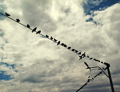 evening birds**  (Saeedeh (Sormeh)) Tags: sky bird