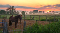 Good morning horse / Explore - Front Page (matt.koerner1) Tags: horse mist sunrise germany deutschland nebel pentax matthias pferde sonnenaufgang hdr koppel niedersachsen lowersaxony k7 krner ashausen sigma18250 mattkoerner1
