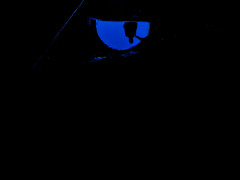 a cat eye (obsidiana10) Tags: blue black eye silhouette azul ojo noir negro yeux bleu silueta blau schwarz azurro ollo acateye silhouetteinyoureye siluetaentusojos