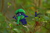 "Blue (froggyboggler) Tags: gnomes fingerpuppet garden"" gardens"" ""jeff ""better dale's"