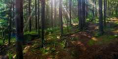 Primordial Forest (snapdragginphoto) Tags: sunlight forest moss woods spooky ferns sunbeams firs appalachiantrail primordial carversgap roundbald primordialforest