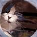 #208 - Kitty Jail