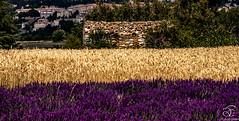 Missing Provence - 17 (BeNowMeHere) Tags: trip travel flowers summer france color colour nature landscape colorful village lavender colourful provence 500px ifttt benowmehere missingprovence