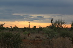 early morning landscapes of the Kruger (Abspires40) Tags: kruger knp krugerpark krugernationalpark sunrise southafrica africa