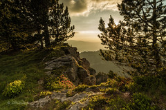 Sonnenuntergang auf dem Niederhorn / Sunset on the Niederhorn (Claudia Bacher Photography) Tags: niederhorn sonnenuntergang sunset sonya7r berneroberland schweiz suisse switzerland alpenrosen blume flower bume tree
