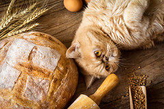 Cat and bread (Arx0nt.) Tags: food rustic cat ginger exotic animal cute funny fluffy bread rural topview grains baking cooking concept abstract wheat eggs golden rollingpin wheatear baked bakery flour eyes face paws fun