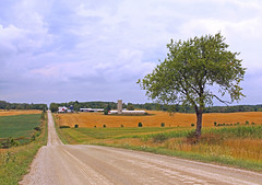 Simple life on the backroad (zgrial) Tags: countryroad backroad rural countryside farmland lonetree field silo barn ontario canada summertime landscape zgrial