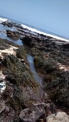 The alley (rasputina2) Tags: cabrillo beach tide pool algae surf grass