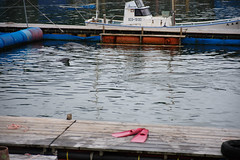 20160821-DS7_3134.jpg (d3_plus) Tags:  aiafnikkor28105mmf3545d d700 drive fish marinesports apnea 281053545 28105mmf3545af aiafzoomnikkor28105mmf3545d izu sea   minamiizu  28105mmf3545  28105mmf3545d  28105mm watersports sky  28105  japan   fishingport skindiving port nikon   street  nikkor       snorkeling underwater nikond700 touring scenery   nature  shizuoka  zoomlense diving  nikon1