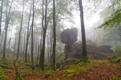 Secretos del bosque (Ekaitz Arbigano) Tags: ekarbig ekaitz arbigano bosque forest niebla fog foggy landscape paisaje mystic atmosphere atmosfera arbol tree rocks rocas urbasa hojas leaves nature