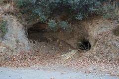 (Psinthos.Net) Tags:  psinthos september autumn     nature morning        fasuli fasouli fasoulipsinthos fasoulivalley fasoulipsinthou    valley psinthosvalley   caves cave fallenleaves   leaves
