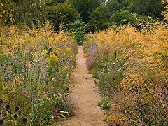 Wild Path! (springblossom3) Tags: oxford botanical gardens flowers wildflowers garden nature