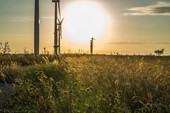 West Texas Morning (15 of 40) (mharbour11) Tags: wildcats elk purple sunrise westtexas texas sky windturbines windmill sun silhouettefire silhouette