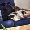 "Nap Time. April 22, 2012 at 01:16PM • <a style=""font-size:0.8em;"" href=""https://www.flickr.com/photos/32369419@N00/7103279519/"" target=""_blank"">View on Flickr</a>"