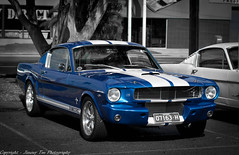 Mustang Autumn Roundup (jimtz) Tags: ford shelby mustang 1966mustang fastback gt350 66mustang canon30d sigma50mmf14 1965fastback 1966fastback