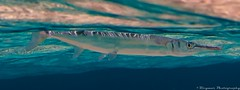 Grand Cayman (Ricardo's Photography (Thanks to all the fans!!!)) Tags: desktop sea wallpaper art photography underwater screensaver background fine royalcaribbean grandcayman grancayman ricardomangual ricymar ricymarfineartphotography
