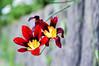 (kuuan) Tags: flowers macro takumar mf manualfocus preset macrotakumarf450mm