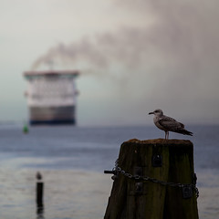 A Bird and Ferry (Mabry Campbell) Tags: bird water animal ferry gteborg photography coast harbor boat photo europe sweden ships gothenburg coastal photograph 100 sverige february scandinavia piling f28 squarecrop saltwater 2012 200mm ef200mmf28liiusm sec mabrycampbell february292012 201202293357