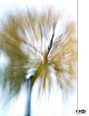 Tree (Monika Ostermann) Tags: summer lightpainting tree art schweiz europa emotion zug cham vilette lichtmalerei zugzg