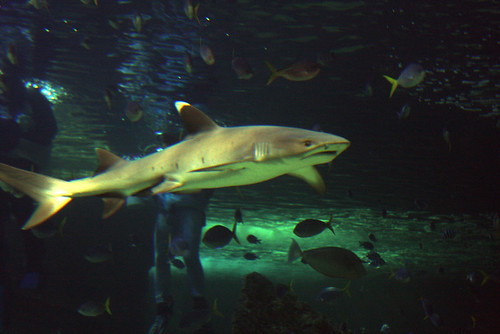 Shark by Eva Rinaldi Celebrity and Live Music Photographer, on Flickr