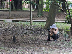 IMG_3347 (jaglazier) Tags: trees birds animals june gardens portraits women cities taiwan parks photographers taipei daanforestpark adults urbanism 2012 daan unidentified deciduoustrees 6112 unidentifiedspecies copyright2012jamesaglazier