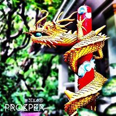 """prosper""มังกรทองคาบแก้วสีสดสวย ความร่ำรวยเจริญงามตามดอกผล มังกรแทนความยิ่งใหญ่จากเบื้องบน แก้วล้นพ้นตัวแทนความร่ำรวย."