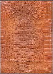() Tags: flickr alligator crocodile wesley flick chen howen     chenhowen
