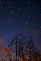 reaching for the stars (aromatoast) Tags: blue tree silhouette stars star astronomy nightsky blau stern baum sterne astronomical astronomic astronomie astronomisch sternenzelt nachthimmer panoplyofthestars