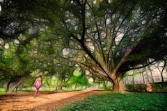 Walking (Di Gutti (diegogutierrez79@gmail.com)) Tags: park parque arbol sevilla walk paisaje seville andalucia andalusia parquedemarialuisa sevillan fractalius sevillában