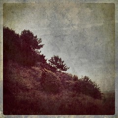 Jernhatten, Denmark (Fred Levy) Tags: nature vintage landscape denmark bush aged slope iphone iphoneography