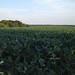 "Illinois Land for Sale - 65 Acres in Knox County • <a style=""font-size:0.8em;"" href=""http://www.flickr.com/photos/66358149@N06/7698812106/"" target=""_blank"">View on Flickr</a>"