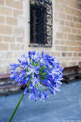 Flor (cvielba) Tags: mar flor guipuzcoa zarautz cantabrico
