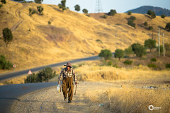 Sharbazher - Kurdistan (KORAK AGHA) Tags: nikon d600 nikkor 135mm f28 ais manual sharbazher shepherd nature