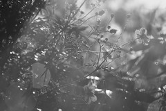 Analog Forest. (Grf: f the pp) Tags: analog lightshadows bw