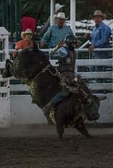 Tak_CPRA_2016-5271 (takahashi.blair) Tags: coachtak rodeo blairtakahashitakahashiblaircoachtakblairtakahashi pincher creek barrel racing bronc rope bareback steer bullriding
