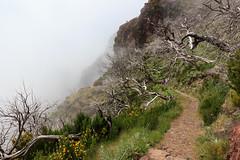 (jmonhof) Tags: pico arreiro ruivo pr1 hike wandern madeira gebirge mountain