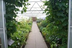 Edible Garden (ianharrywebb) Tags: edinburgh iansdigitalphotos royalbotanicgardens flowers flower