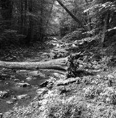 Skryjsk jezrka (Luk Latovka) Tags: flexaret vii monochrome blackandwhite ilford delta 100 medium format forest river fomapan 200 belar 3580