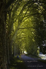 l'attente (jepag0) Tags: trees platanes arbres allee path lumiere vert green branches attente banc allier vichy