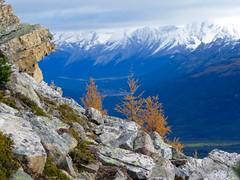 Mount St Piran Larch Viewing and Summit Hike - Views north (benlarhome) Tags: alberta canada lakelouise banff