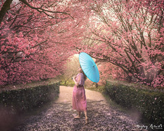 Sakura Parade (Hayley Roberts Photography) Tags: art artist canon cherryblossom compositing conceptualfineartphotography fineart hanami nature parasol photoshop pink sakura selfportrait spring trees