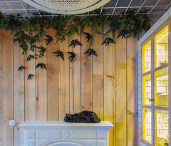 Wabi-sabi_04 (Decoratrix.com) Tags: casadecor decoracin interiorismo madrid exposicin 2016 chimenea tabla alacena cermica vencejo golondrina gato