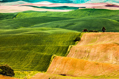 To Infinity and Beyond (Culinary Fool) Tags: palouse usa washington 2016 tree patchwork culinaryfool palousescenicbyway rollinghills roadtrip brendajpederson travel hills photography farm wa green ranch may field travelwa 70200mm28