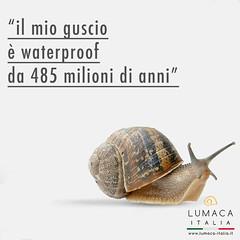 guscio lumaca waterproof (lumacaitalia) Tags: guscio lumaca iphone7 waterproof