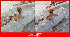 Baby Squirrel Delivery (ViralAIO) Tags: babysquirrel delivery