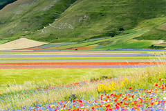 _DSC5296 (Lord_Robe_83) Tags: castelluccio fioritura